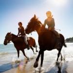 horse sharing